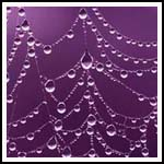 full circle websites purple web